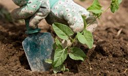 Homeowners can move and replant vegetation such as hydrangeas, hostas and rosebushes.