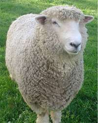 Sheep dipping is disguising a spy's identity with a day job.