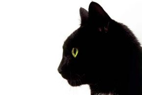 """Edgar Allan Poe's short story """"The Black Cat"""" was inspired by his own pet cat, Catarina. See more pet pictures."""