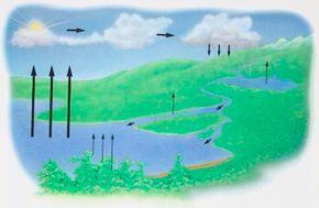 Natural aquatic ecosystems are much more complicated than the aquatic environment of an aquarium.