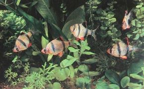 The presence of plant life and fish overcrowding are two big factors in aquarium water quality.