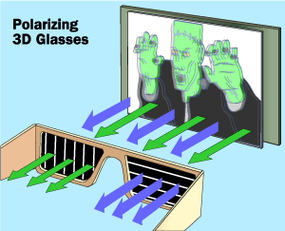 The polarized glasses allow only one of the images into each eye because each lens has a different polarization.