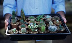 Succulents are more colorful and diverse than you think.