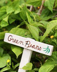 Make yours an edible garden!