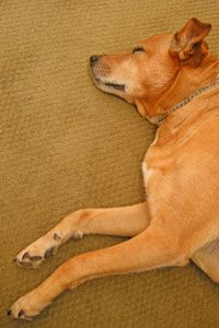 If you have pets or young children, a low-maintenance carpet might be best.