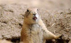 Sure, prairie dogs are cute -- but they can also carry bubonic plague.