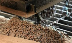 Cocoa beans begin to pile as they are unloaded from a train car outside the Blommer Chocolate Company in Chicago, Ill.
