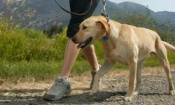 You can hire a dog walker to exercise your pup a few times a day.