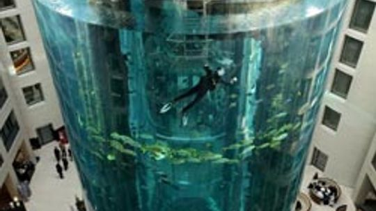 No More Muddy Waters: 5 Aquarium Cleaning Tips