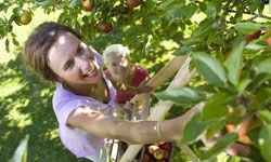 You don't need a whole orchard to enjoy fresh apples -- one tree will do.