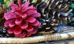Pinecones are great holiday crafts, but you can decorate them for any time of year.