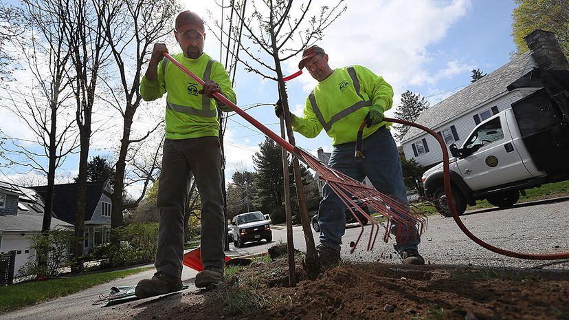 geoengineering planting trees climate change