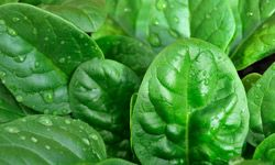 Spinach does more than make you strong. It also helps heal dry skin.