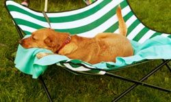 An elevated bed can help your pooch feel more comfortable in hot climates.