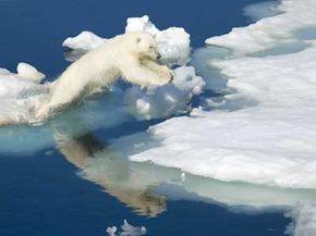 A polar bear makes its way across melting Arctic ice.