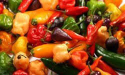 You won't miss the salt when you fire up the flavor with hot peppers. With varieties from mild to taste-bud scorching hot, you're sure to find something to please your palate.