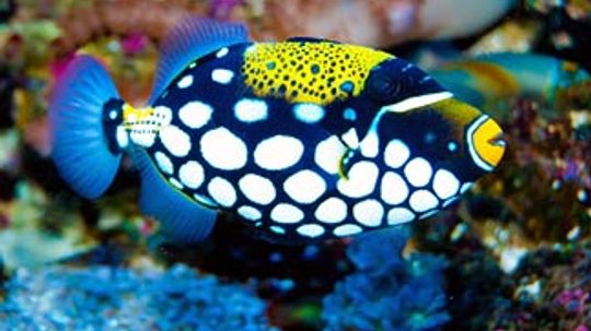 5 Little Known Facts About Fish