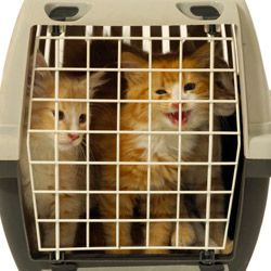 Pets that are uncomfortable in cars or cages may become sick.