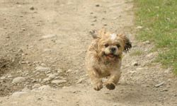 An unrestrained pet might run away at a stop or jump out of the car.