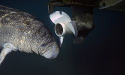 Boat propellers can endanger both animal and plant life.