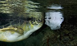 Sea turtles and other wildlife may make the deadly error of mistaking trash for food.