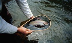Proper handling techniques help minimize harm to the fish you release.