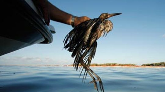 5 Ways You Can Help Animal Victims  Gulf Oil Spill