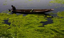 A Kashmiri boatman removes algae from Dal Lake on March 31, 2012 in Srinagar, the summer capital of Indian administered Kashmir, India.
