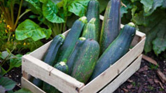 5 Ways to Use Zucchini