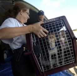 Your dog will feel safer and more secure in its crate.