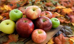 Autumn's bounty includes apples of all shapes, sizes, colors and flavors.