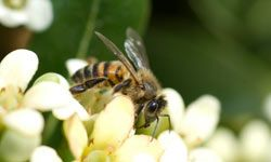 We all know that bees make the thick, golden honey we love to eat, but do you know how they make it? See more pictures of insects.