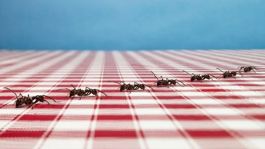 5 Tips to Keep Ants Away From Pets