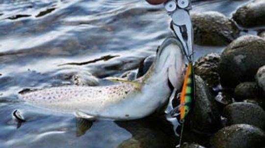 5 Tips for Removing Fish Hooks