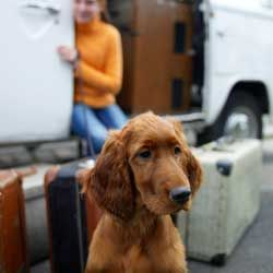 For some dogs, just seeing the suitcases is enough to trigger car sickness.