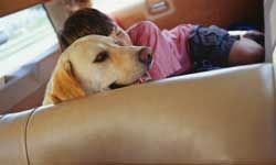 A girl sleeping with a dog in the back of a station wagon. Cute, but not the safest way fora child and dog to ride.