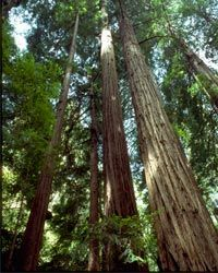 Retirees can choose to volunteer for the National Park Service, which maintains federal lands and monuments across the country, including Muir Woods National Monument in California, home to giant coastal redwood trees.