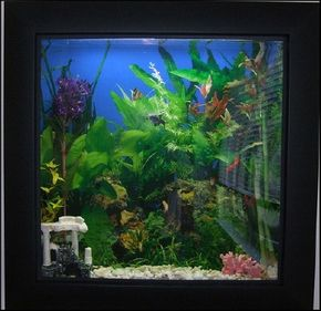 The numbers and sizes of fish that can be kept are affected by both the tank size and tank dimensions.