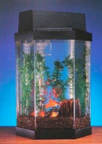 Hexagonal aquariums such as this one can make very attractive displays.