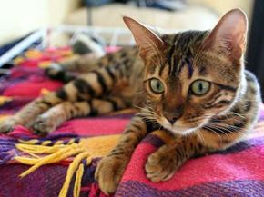 A tortoiseshell tabby named Towser allegedly killed 28,899 mice in 21 years. See more pictures of cats.